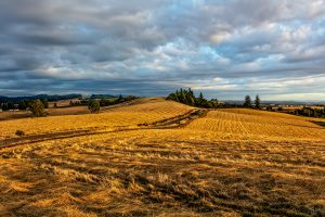 A golden landscape of Waldo Hills, Oregon in evening light.