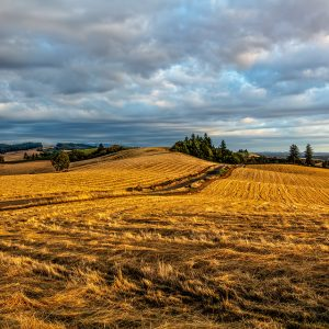 A golden landscape of Waldo Hills, Oregon in evening light.
